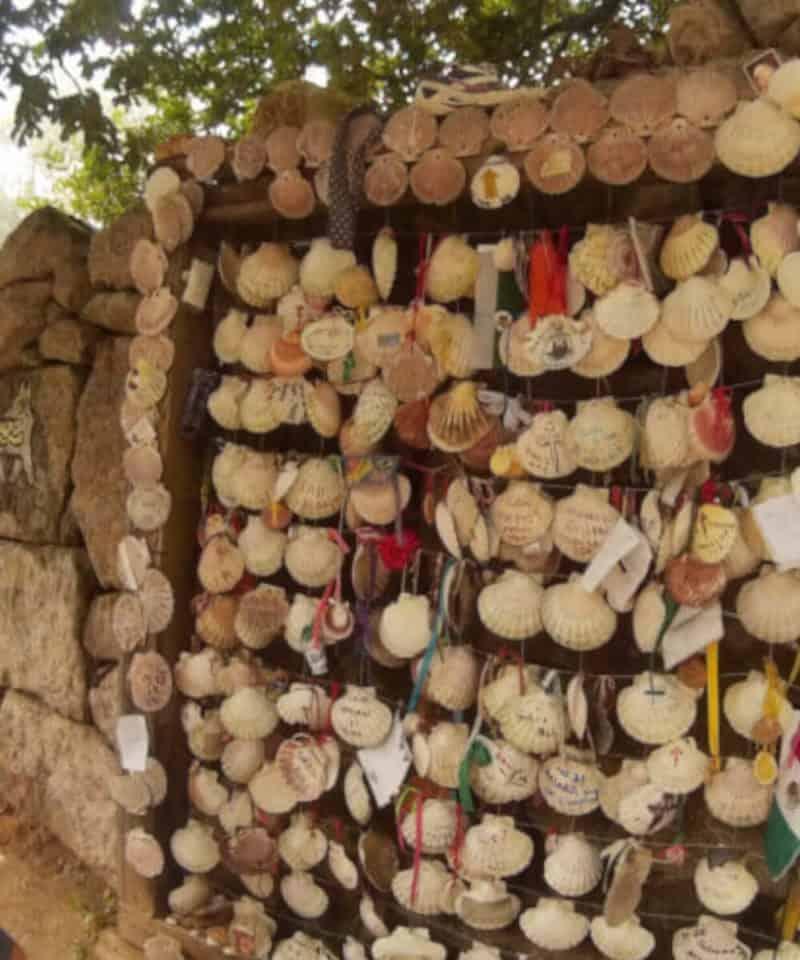 Panel de conchas en santiago